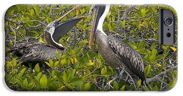 Galapagos Brown Pelican IPhone Case by Bob Gibbons
