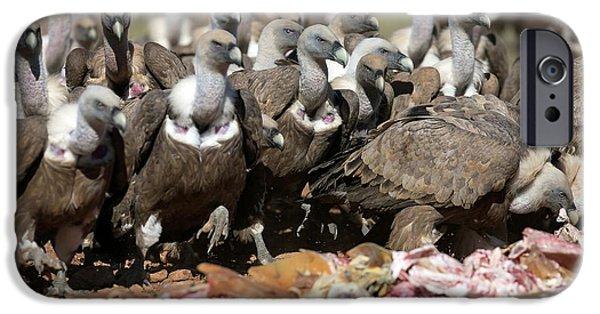 Griffon Vultures Feeding IPhone 6s Case by Nicolas Reusens