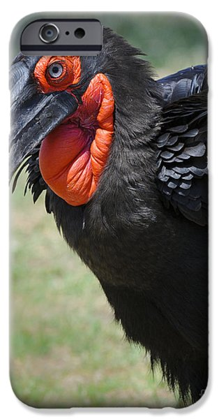 Ground Hornbill IPhone 6s Case by John Shaw