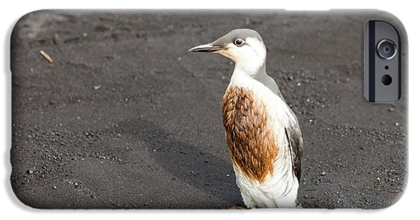 Guillemot Covered In Oil IPhone Case by Ashley Cooper