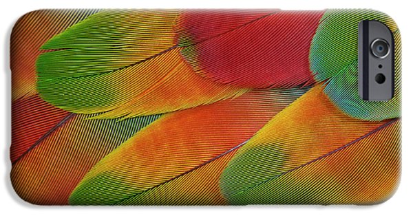 Harlequin Macaw Wing Feather Design IPhone 6s Case by Darrell Gulin