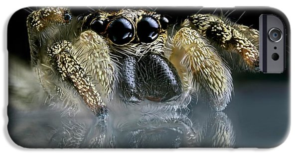 Jumping Spider IPhone Case by Frank Fox