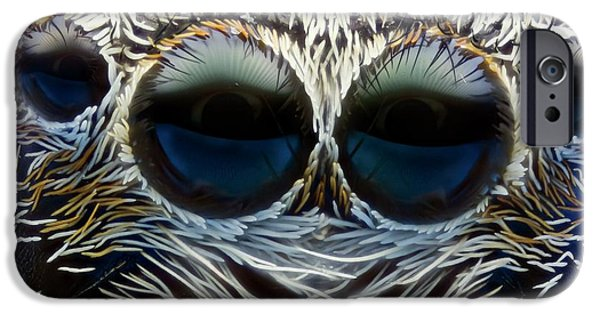 Jumping Spider Head IPhone Case by Nicolas Reusens