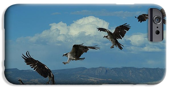 Landing Pattern Of The Osprey IPhone 6s Case by Ernie Echols