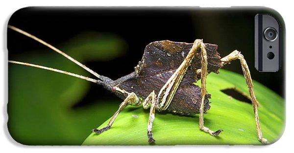 Leaf Mimic Bush-cricket IPhone 6s Case by Dr Morley Read