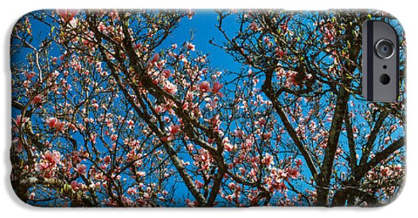 Low Angle View Of Cherry Trees IPhone Case by Panoramic Images