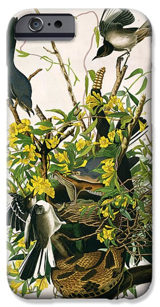 Mocking Birds And Rattlesnake IPhone Case by John James Audubon