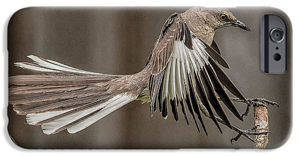 Mockingbird  IPhone 6s Case by Rick Barnard