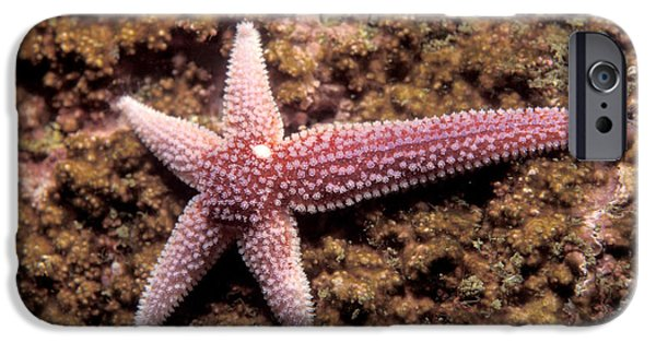 Northern Sea Star IPhone Case by Andrew J. Martinez