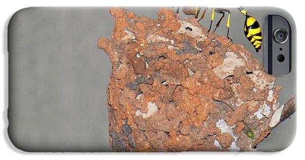 Potter Wasp With Nest IPhone Case by K Jayaram