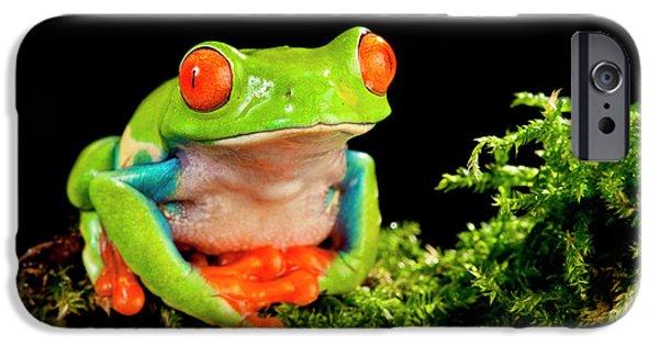 Red Eye Treefrog, Agalychnis IPhone Case by David Northcott