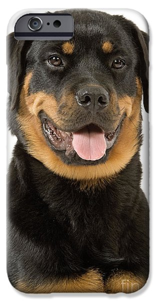 Rottweiler Dog IPhone Case by Jean-Michel Labat