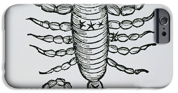 Scorpio An Illustration IPhone Case by Italian School