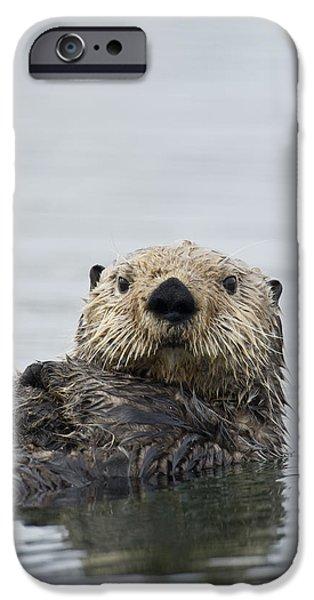 Sea Otter Alaska IPhone 6s Case by Michael Quinton