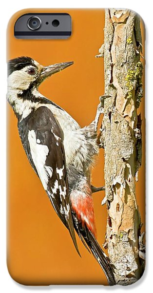 Syrian Woodpecker (dendrocopos Syriacus) IPhone 6s Case by Photostock-israel