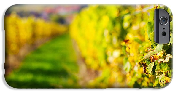 Vineyards In Autumn, Mittelbergheim IPhone Case by Panoramic Images