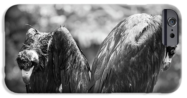 White-backed Vultures In The Rain IPhone 6s Case by Pan Xunbin