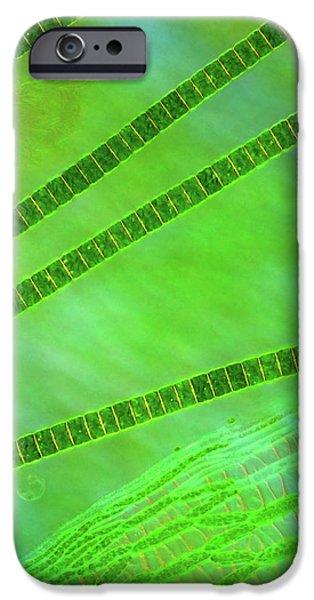 Desmids On Sphagnum Moss IPhone Case by Marek Mis