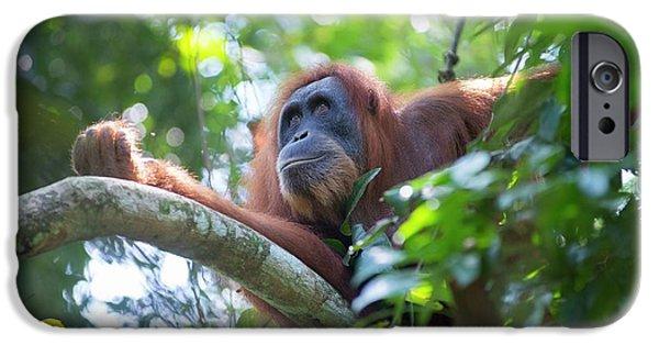 Sumatran Orangutan IPhone 6s Case by Scubazoo