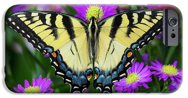 Eastern Tiger Swallowtail Papilio IPhone Case by Darrell Gulin