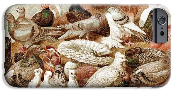 1870 Domestic Fancy Pigeon Breeds Darwin IPhone 6s Case by Paul D Stewart