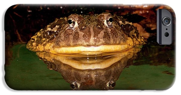 African Burrowing Bullfrog IPhone Case by David Northcott