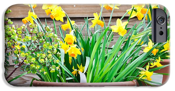Daffodils IPhone Case by Tom Gowanlock