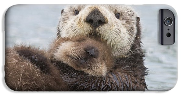 Female Sea Otter Holding Newborn Pup IPhone Case by Milo Burcham
