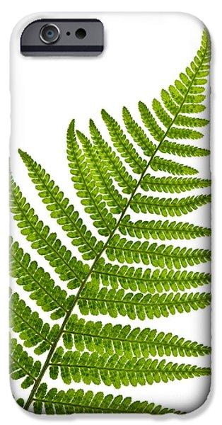 Fern Leaf IPhone 6s Case by Elena Elisseeva