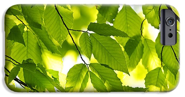 Green Spring Leaves IPhone Case by Elena Elisseeva