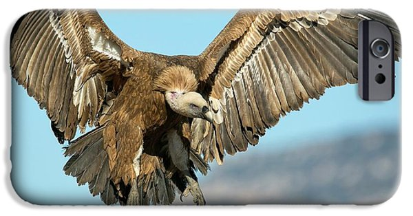 Griffon Vulture Flying IPhone 6s Case by Nicolas Reusens