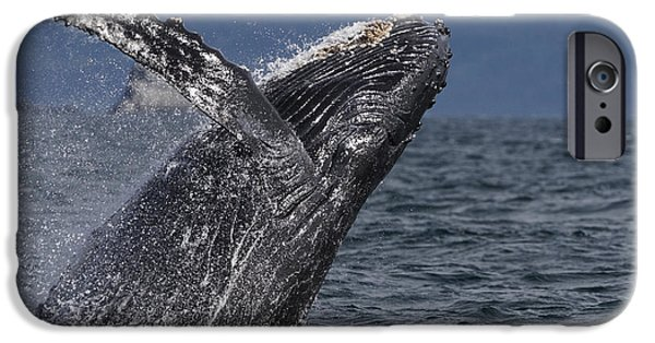 Humpback Whale Breaching Prince William IPhone Case by Hiroya Minakuchi