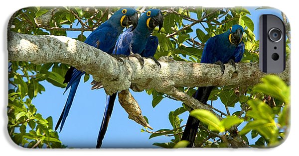 Hyacinth Macaws, Brazil IPhone 6s Case by Gregory G. Dimijian, M.D.