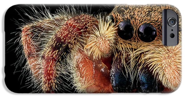 Jumping Spider IPhone Case by Us Geological Survey