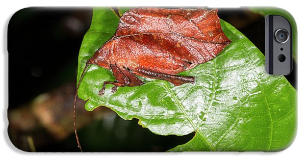 Leaf Mimic Katydid IPhone 6s Case by Dr Morley Read