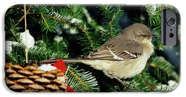 Northern Mockingbird (mimus Polyglottos IPhone 6s Case by Richard and Susan Day