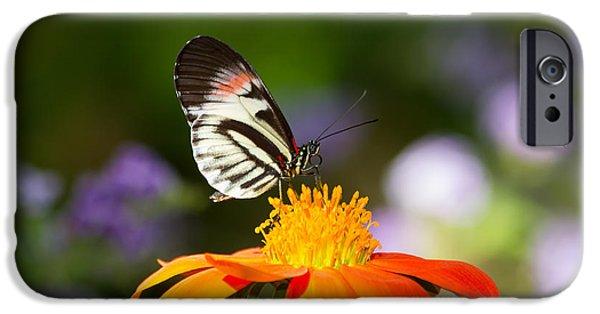 Piano Key Butterfly IPhone Case by Kim Hojnacki