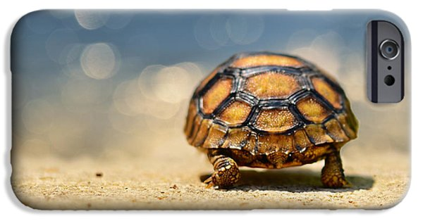Road Warrior IPhone 6s Case by Laura Fasulo