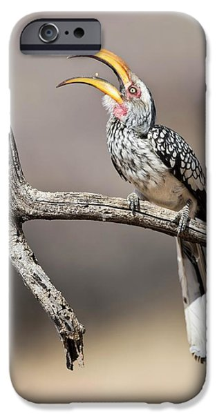 Southern Yellow-billed Hornbill IPhone 6s Case by Tony Camacho