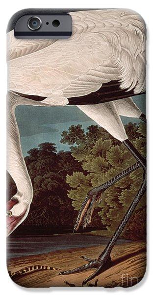 Whooping Crane IPhone Case by John James Audubon