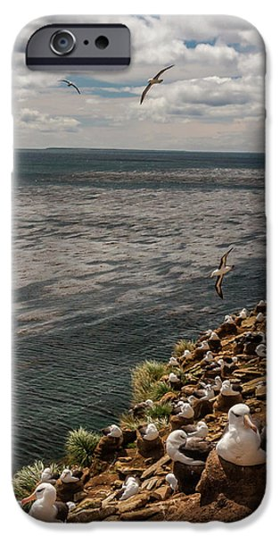 South America, Falkland Islands IPhone Case by Jaynes Gallery