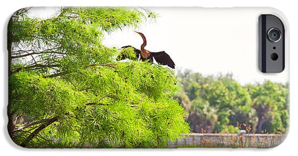 Anhinga Anhinga Anhinga On A Tree IPhone 6s Case by Panoramic Images