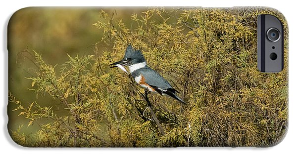 Belted Kingfisher With Fish IPhone 6s Case by Anthony Mercieca