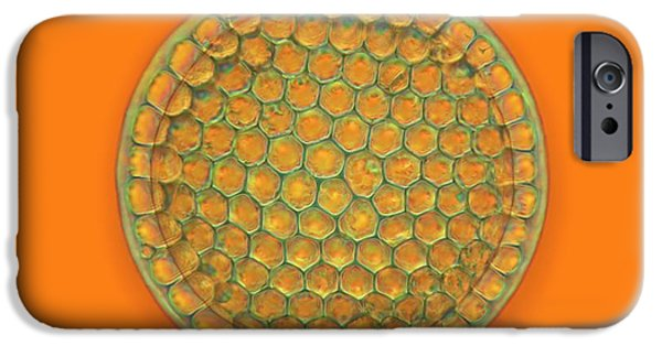 Fossil Diatom IPhone Case by Frank Fox