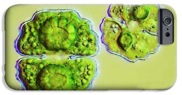 Green Algae IPhone Case by Frank Fox