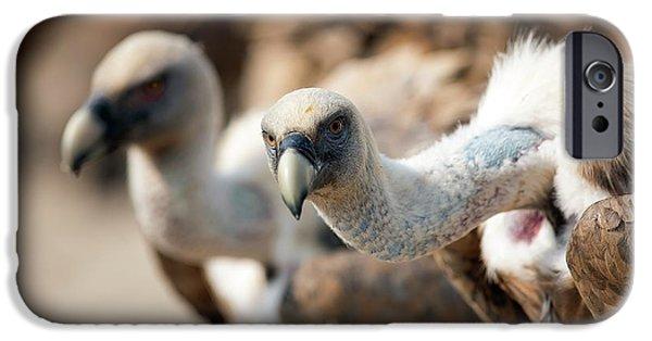Griffon Vultures IPhone 6s Case by Nicolas Reusens
