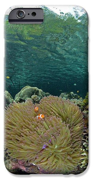 Indian Ocean, Indonesia, Raja Ampat IPhone Case by Jaynes Gallery