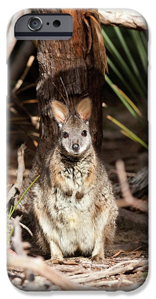 Tammar Wallaby (macropus Eugenii IPhone 6s Case by Martin Zwick