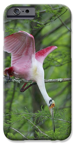 Usa, Louisiana, Lake Martin IPhone 6s Case by Jaynes Gallery