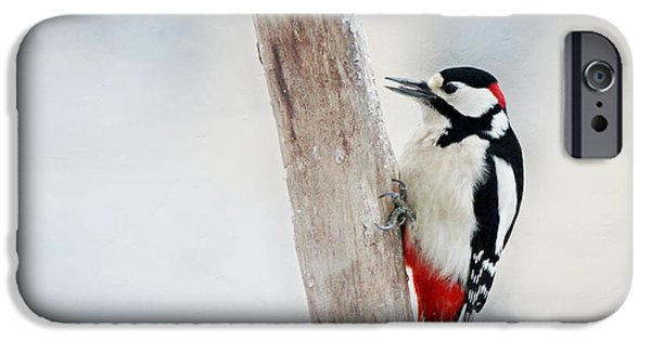 Woodpecker IPhone Case by Heike Hultsch